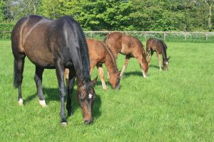 horse-with-foals-lg