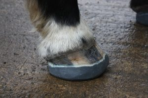 Hind shod with Imprint Sport Shoe.