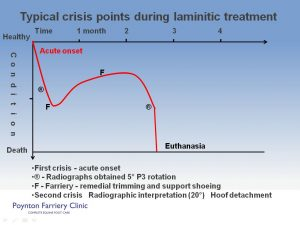 Laminitis - typical crisis slide 1