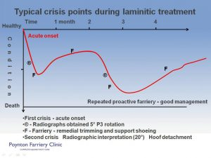 Laminitis - typical crisis slide 2