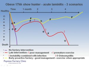 Laminitis - typical crisis slide 3