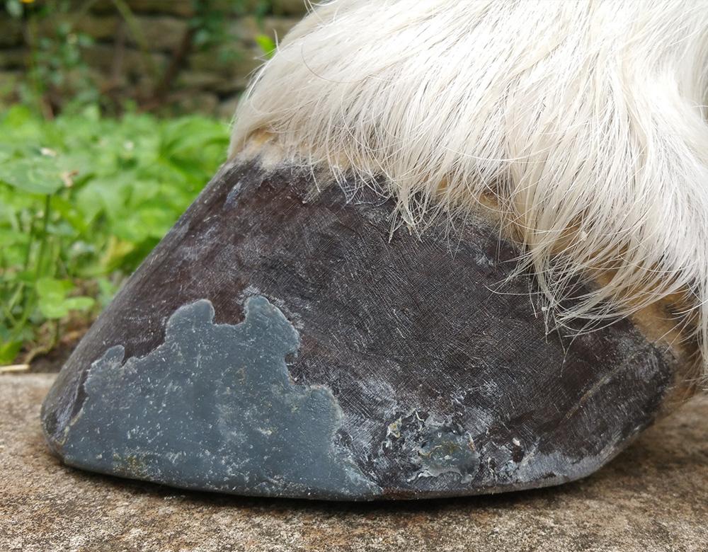 Hoof Repair Graphite Hoof
