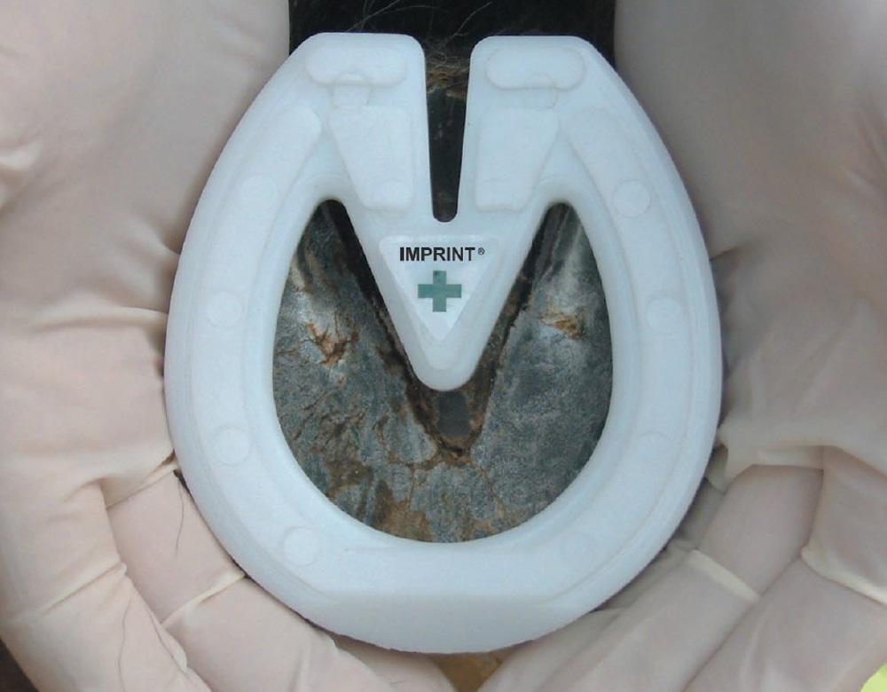 Imprint Foal Shoe