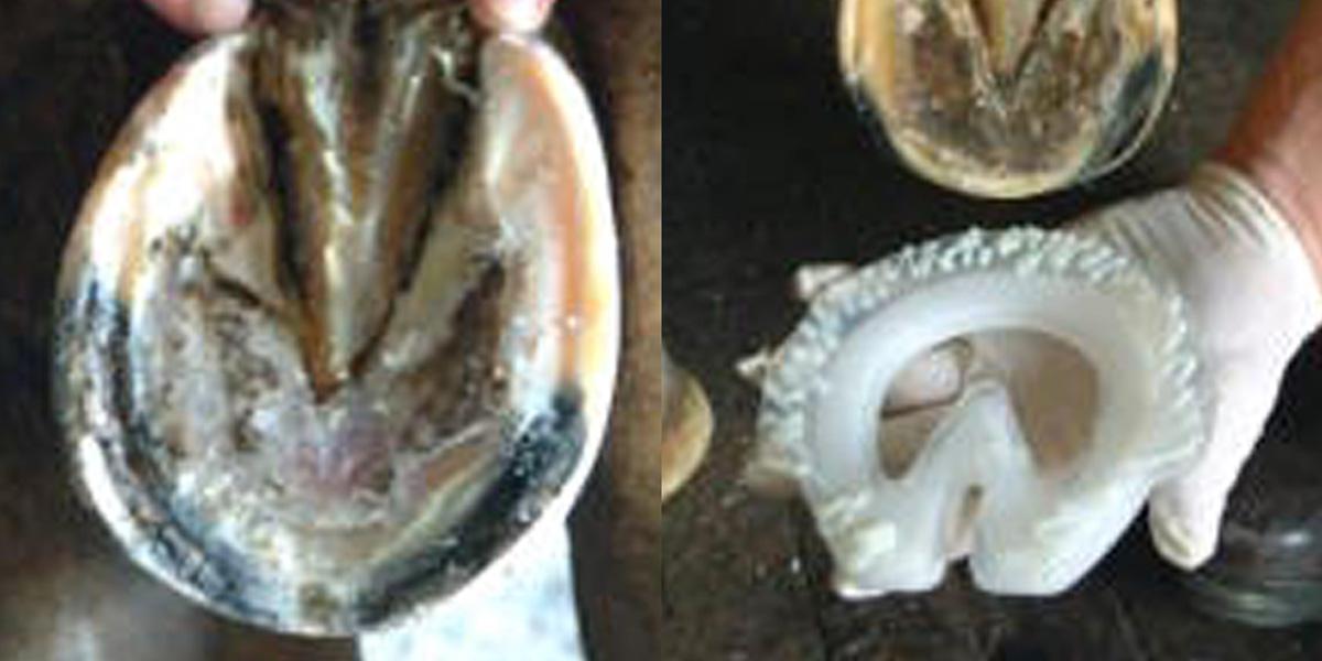 Laminitis Shoe Fitting Half