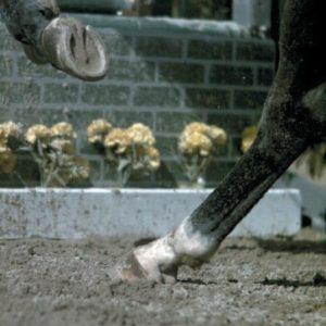 Equine extreme movement