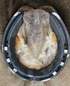 Bespoke Frog Cast moulded